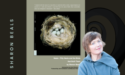 ART- SHARON BEAL, BIRDS NEST