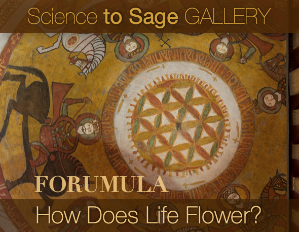 HOW DOES LIFE FLOWER