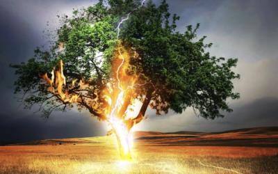 Elec-Treecity — The Next Bigly Thing !